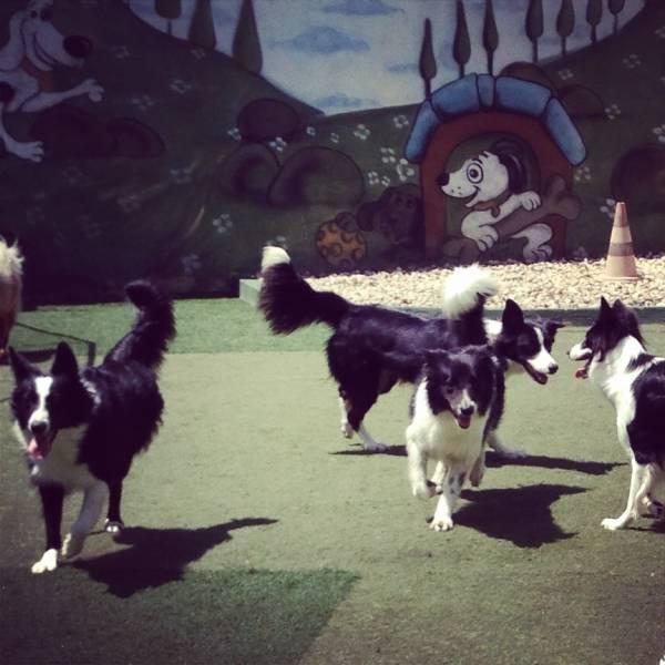 Valores de Adestrador para Cachorros na Vila Andrade - Adestrador de Cachorro
