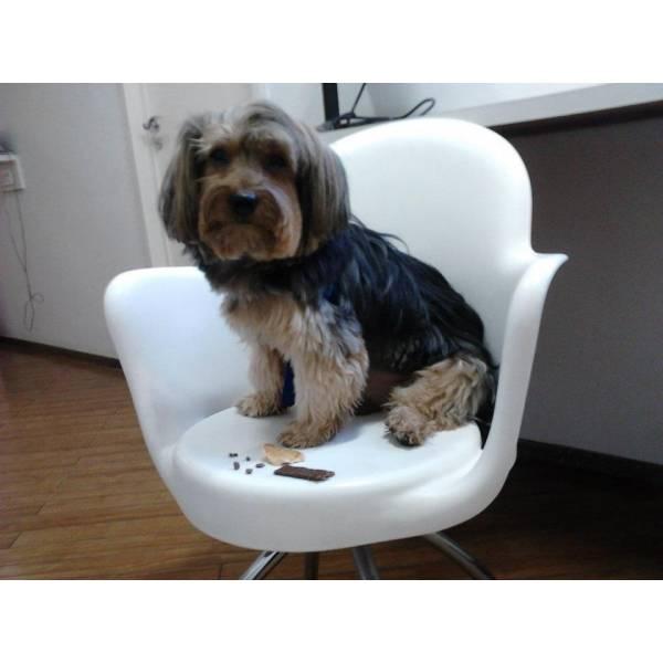 Valores de Adestrador para Cachorros no Campo Belo - Adestrador Profissional de Cães