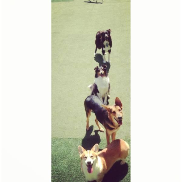 Valores de Adestrador para Cães em Raposo Tavares - Adestrador de Cachorro