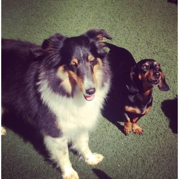 Valores de Adestrador para Cão em Itapevi - Adestrador de Cãesno Brooklin