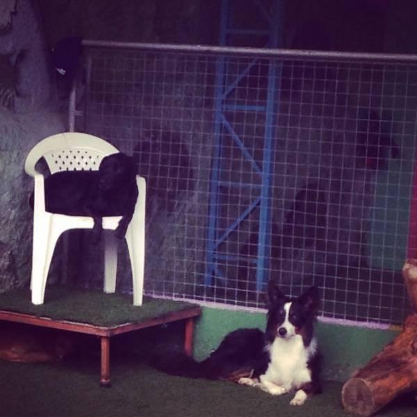 Valores de Adestradores para Cachorro em Embu Guaçú - Adestrador de Cãesno Itaim Bibi