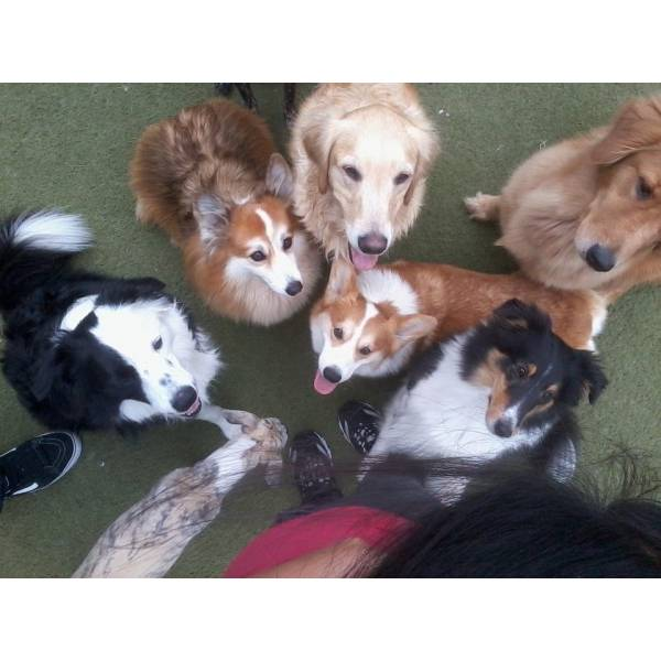 Valores de Adestradores para Cachorro na Saúde - Adestrador Profissional