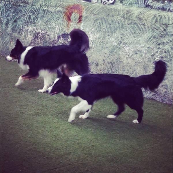 Valores de Adestradores para Cachorro na Vila Sônia - Adestrador de Cãesno Itaim Bibi