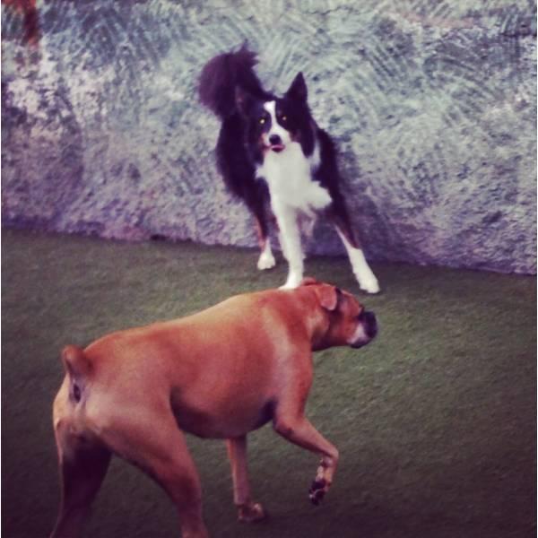 Valores de Adestradores para Cachorros em Taboão da Serra - Adestrador de Cãesno Itaim Bibi