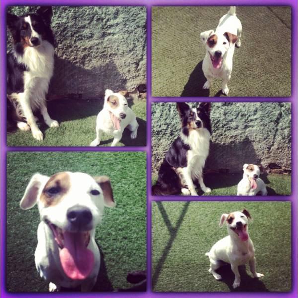 Valores de Adestradores para Cães em Vargem Grande Paulista - Adestrador de Cãesno Itaim Bibi