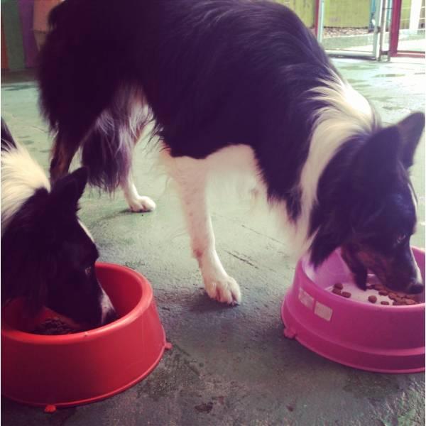 Valores de Adestradores para Cães no Ibirapuera - Adestrador de Cãesno Itaim Bibi