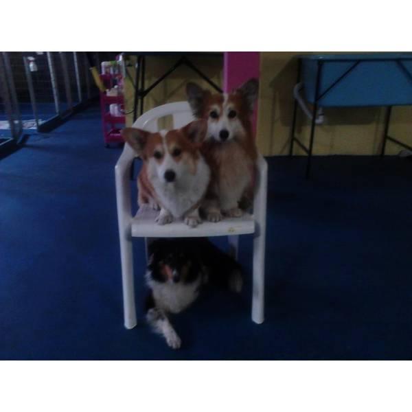 Valores de Adestradores para Cães no Jockey Club - Adestrador de Cachorros