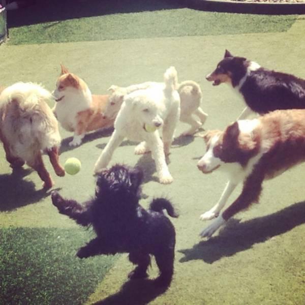 Valores de Adestradores para Cão na Vila Leopoldina - Adestrador de Cãesno Brooklin