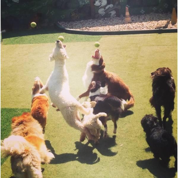 Valores de Adestradores para Cão no Pacaembu - Adestrador de Cãesem SP