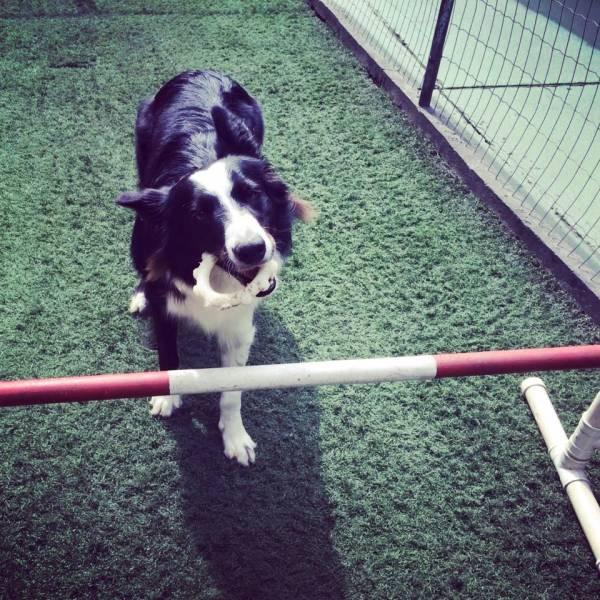 Valores de Adestramento de Cachorro na Vila Sônia - Adestramento de Cães em Santo Amaro