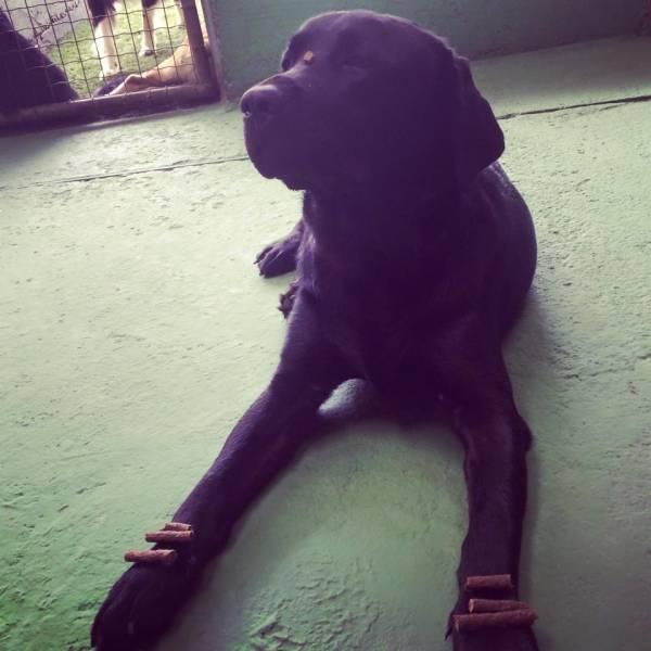 Valores de Adestramento de Cães na Cidade Ademar - Serviço de Adestramento