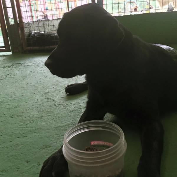 Valores de Adestramento de Cão em Itapecerica da Serra - Adestramento Canino