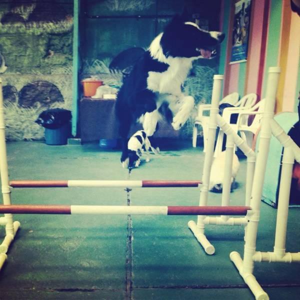 Valores de Adestramento para Cães no Jardim Europa - Adestramento de Cães Filhotes