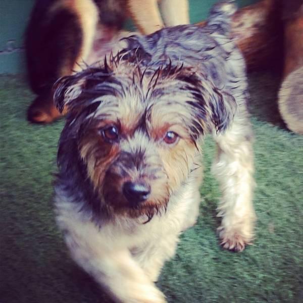 Valores de Daycare de Cão  em Barueri - Day Care Canino
