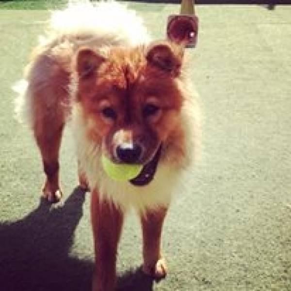 Valores de Daycare em Osasco - Day Care Canino