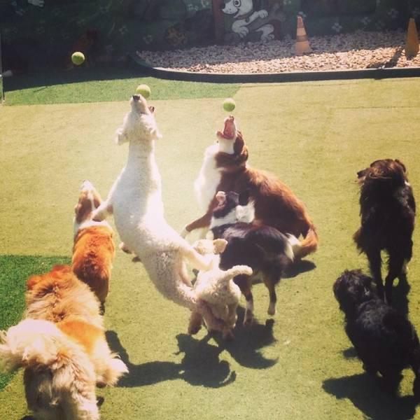 Valores de Daycare para Cachorro em Taboão da Serra - Day Care Canino