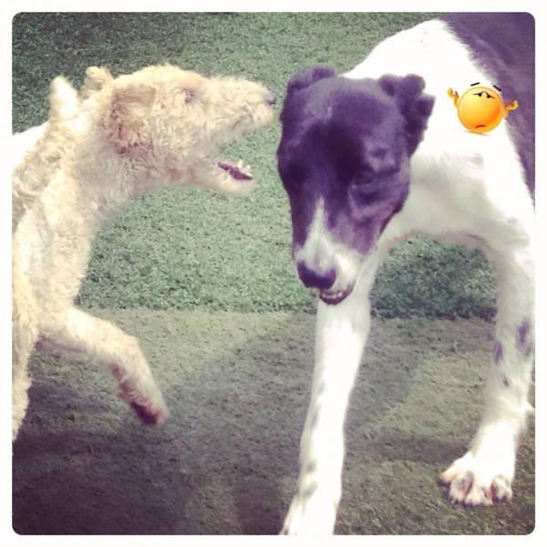 Valores de Daycare para Cachorros em Alphaville - Day Care Canino