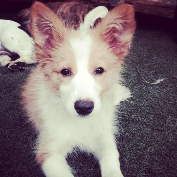 Valores de Daycare para Cães em Moema - Day Care Canino