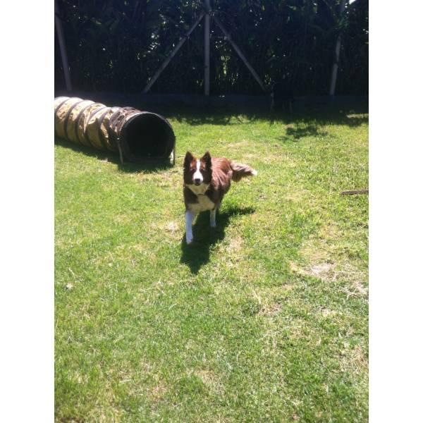 Valores de Hotéis para Cachorros no Jardim São Luiz - Hotel para Cães na Zona Sul