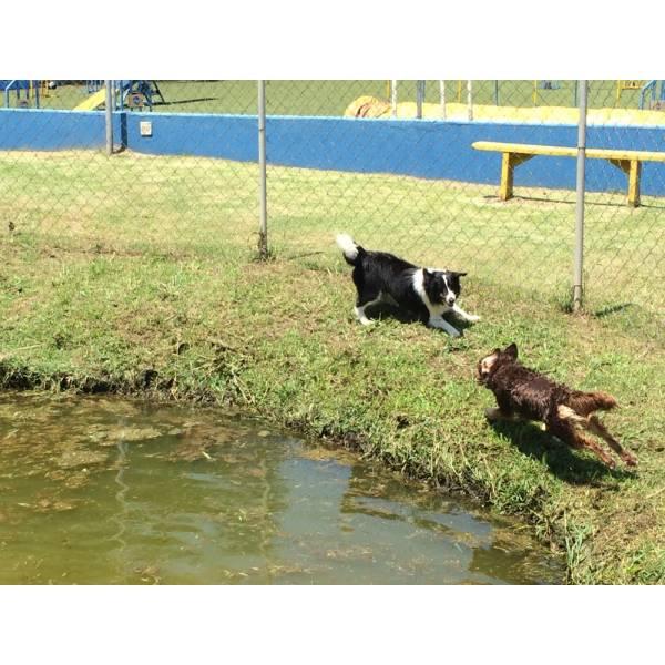 Valores de Hotéis para Cães no Ipiranga - Hotel para Cães em São Paulo