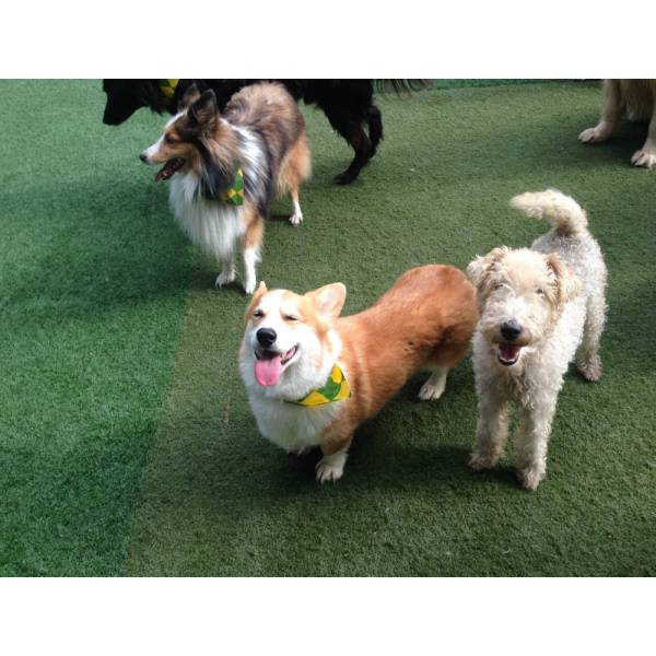 Valores de Hoteizinhos para Cachorro  no Jardim São Luiz - Hoteizinhos para Cães
